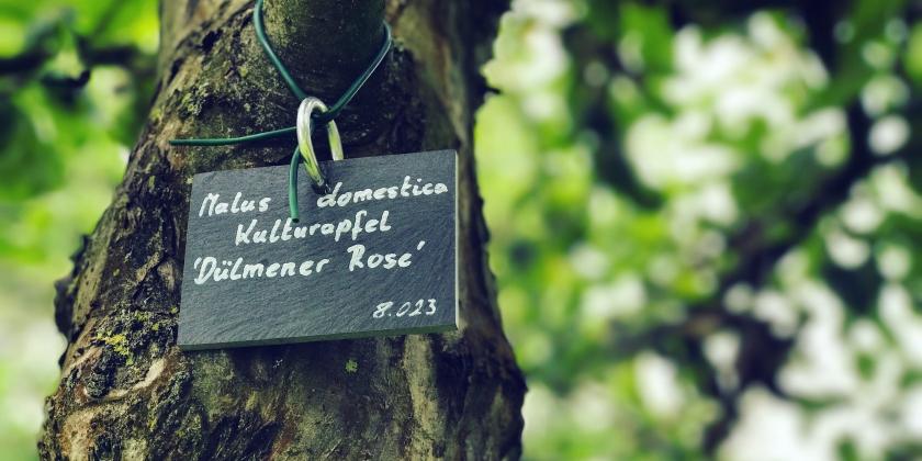 Kapuziner Klostergarten Münster erhält Auszeichnung der UN-Dekade Biologische Vielfalt
